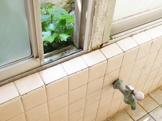 1306湯巡り湯田中窓辺の草.jpg